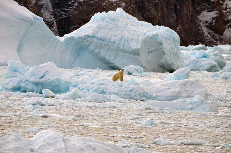 A polar bear drifts on a melted glacier.